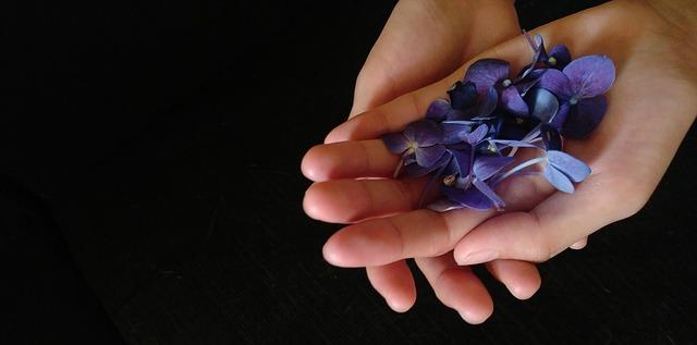 violet-flowers-2091643_640