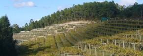 La globalización en la viticultura