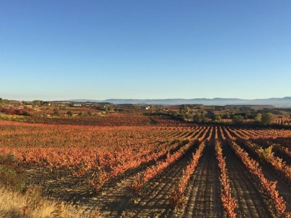 Vinedo_en_Rioja_3