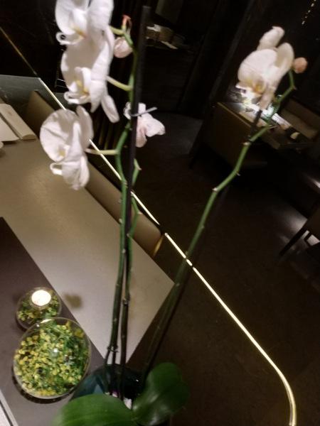 Las orquídeas siempre aportan un punto de elegancia y belleza