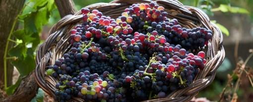 Madeira celebra el Wine Festival