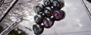 Los cinco vinos de hielo más sorprendentes para la Navidad